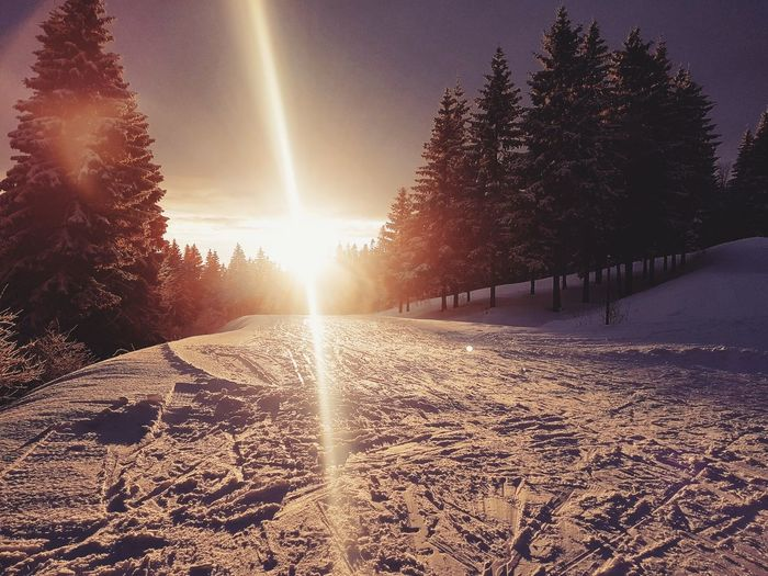Oslo ColdLove XCSKI SNØLOVE Snø Snow WINTERKINDER Norge Scandinavia Norway Sunlight Nature Outdoors Tree Sun Winter Agriculture No People Scenics Cold Temperature Day Beauty In Nature Shades Of Winter