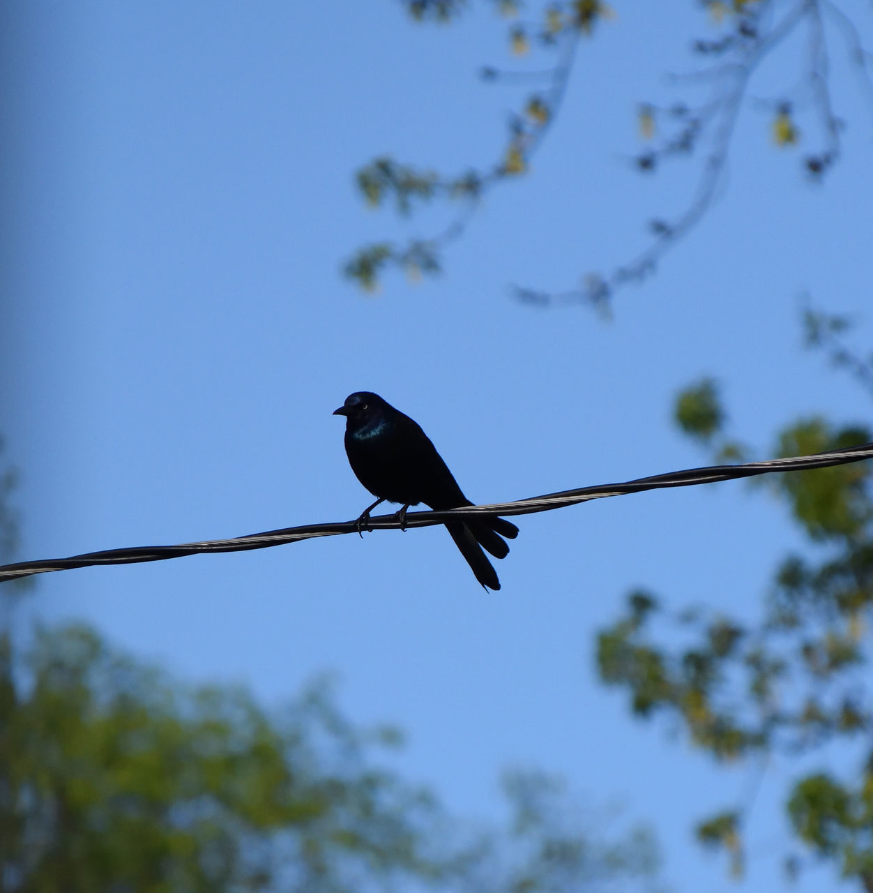 bird, one animal, animals in the wild, animal themes, low angle view, tree, focus on foreground, animal wildlife, perching, nature, day, no people, clear sky, outdoors, branch, beauty in nature, sky, close-up
