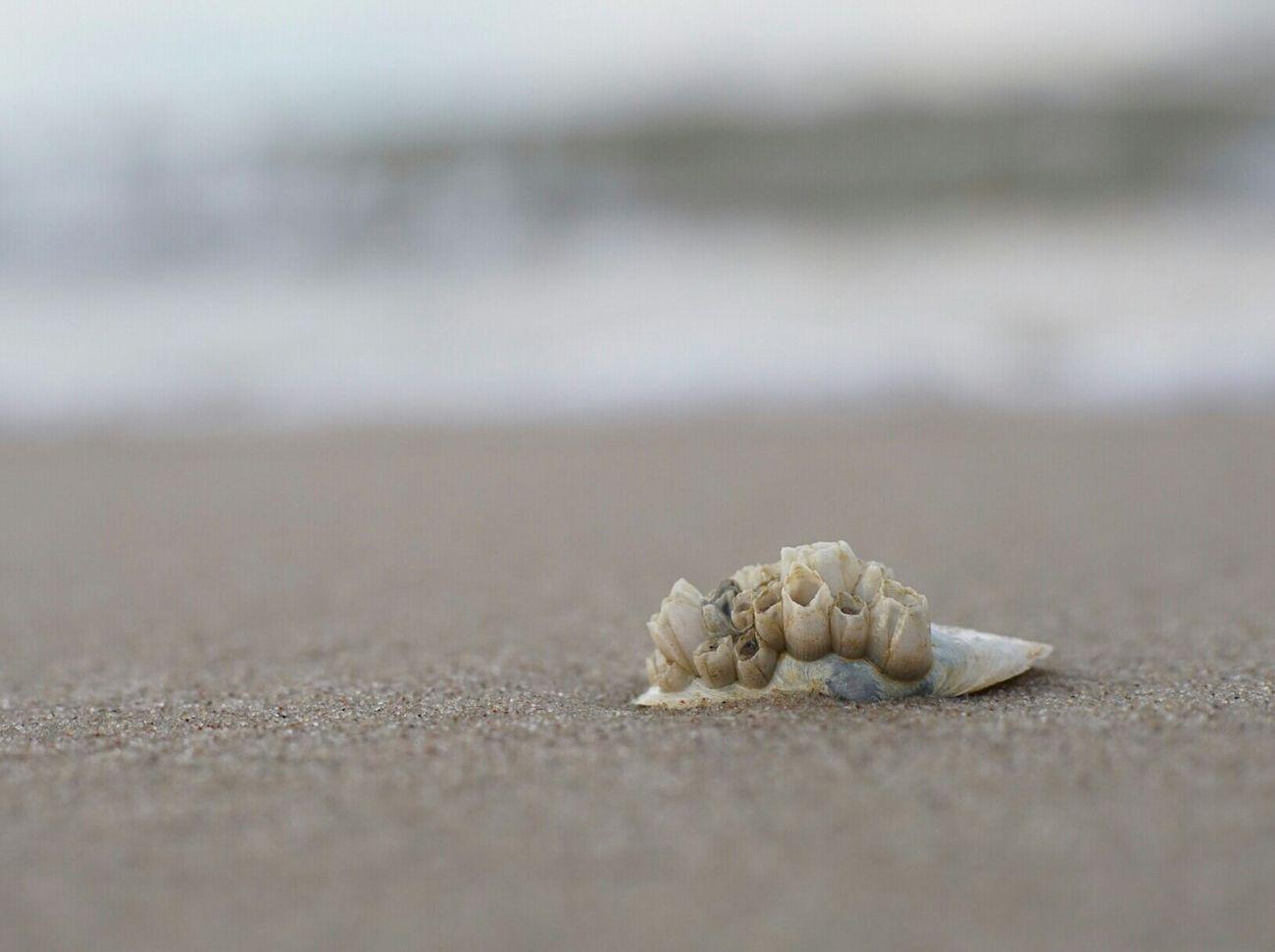 Ostsee Strand Sands Muschel Urlaub Holiday See Beach Muschelschalen Schell Polen