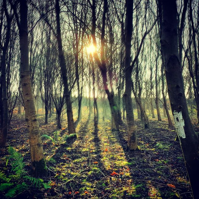 winter walks with the dogs Photooftheday Landscape_Collection Ee_daily Eye4photography