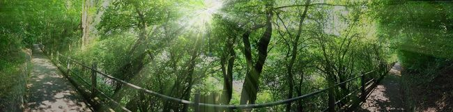 Panorama Nature Green IPhoneography Supernormal Light And Shadow Relaxing Wanderlust Walk This Way Enjoying Life