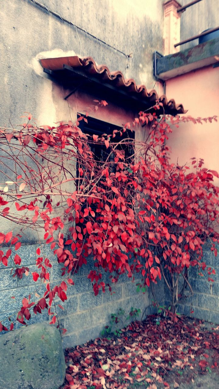 autumn, leaf, no people, architecture, change, built structure, building exterior, growth, outdoors, nature, plant, red, day, flower