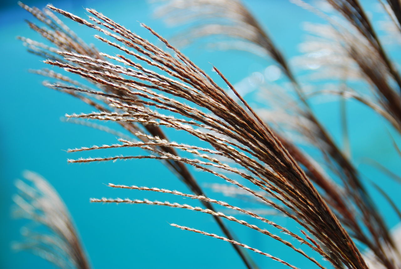 Agriculture Beauty In Nature Cereal Plant Close-up Day Ear Of Wheat Farm Farm Living Gardenstate Growth Low Angle View Nature New Jersey Njphotographer Njshooterz No People Outdoors Plant Reeds Sky Soft Tranquil Scene Wheat