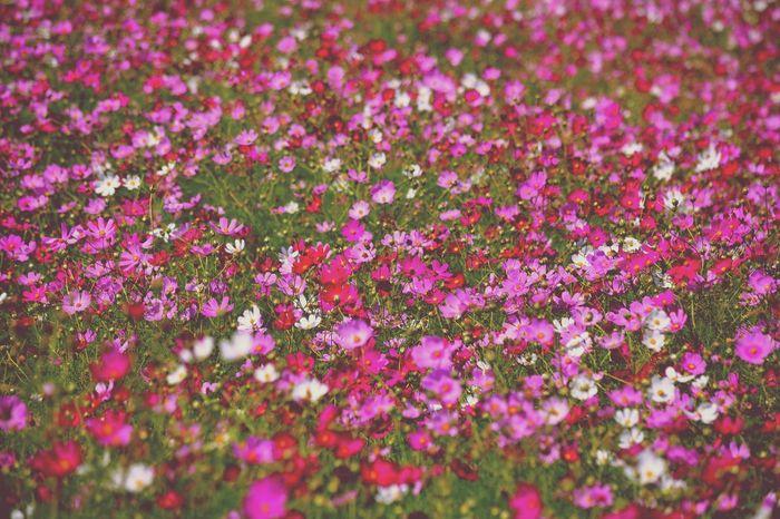 お久しぶりです。秋、楽しんでますか? Photography Flowers Keicomoment Colors Of Autumn