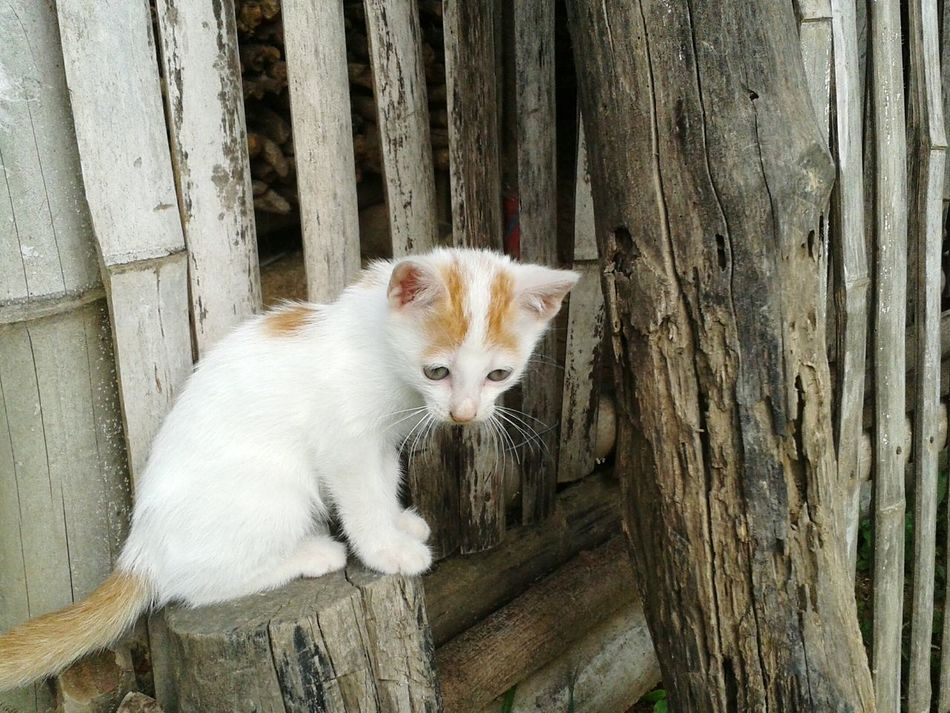 Beautiful stock photos of baby katzen,  Day,  Domestic Animals,  Domestic Cat,  Feline