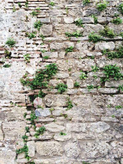 Green Nature Brick Wall Findings First Eyeem Photo