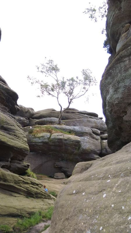 Beauty In Nature Brimham Rocks Day Eroded Geology Landscape Nature No People Non-urban Scene Outdoors Rock Rock - Object Rock Formation Scenics Sky Stone Stone - Object Stone Material Tranquil Scene Tranquility Tree