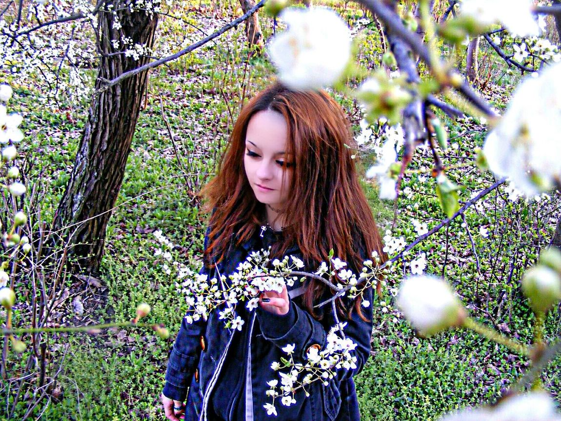 That's Me Spring 2016 Cherry Blossoms Sakura Trees Sakura Blossom White Flowers Innocence Innocent Spring Cherry Blossom Ginger Hair