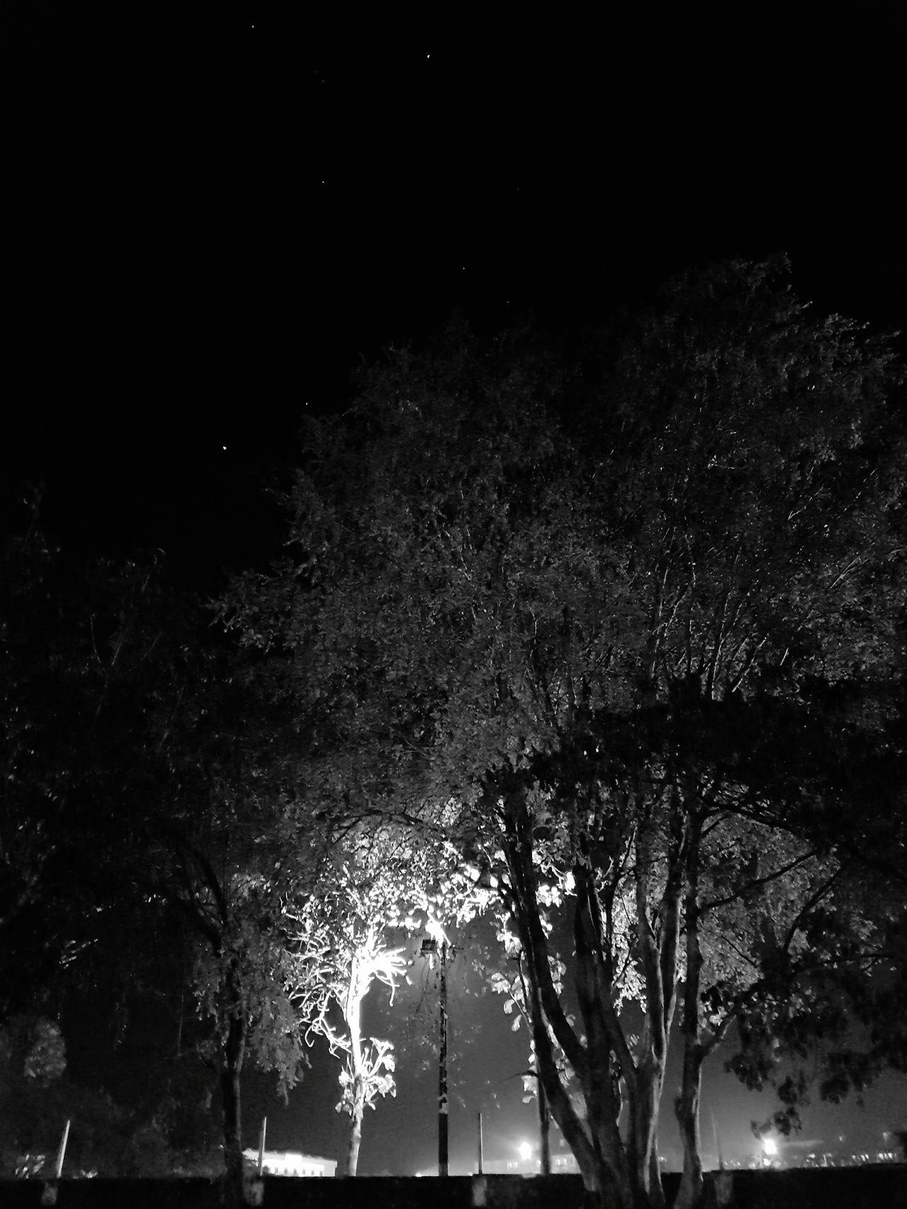 Night Friends Tree Shadow Play