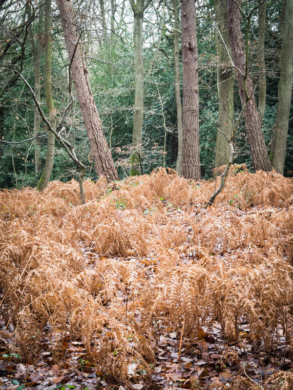 Autmun Colour Of Nature Colourful Day Nature Outdoor Photography Outdoors Trees Winter WoodLand