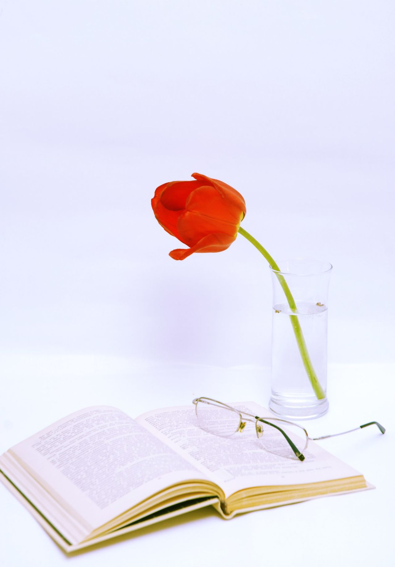Beautiful stock photos of tulip, Beauty In Nature, Book, Drinking Glass, Education