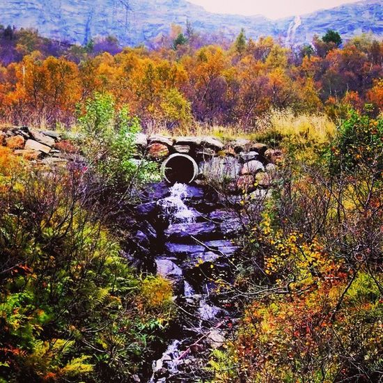 Norway Ig_scandinavia Scandinavia Nature Nature_pd Wonderful_places Loves_world Ig_amazingshots Global_family Gf_daily Photo_forest_gold Nature_captures Rsa_nature Hdr_europe Photooftheday Photo Shotsbyyou_hdr Shotsbyyou