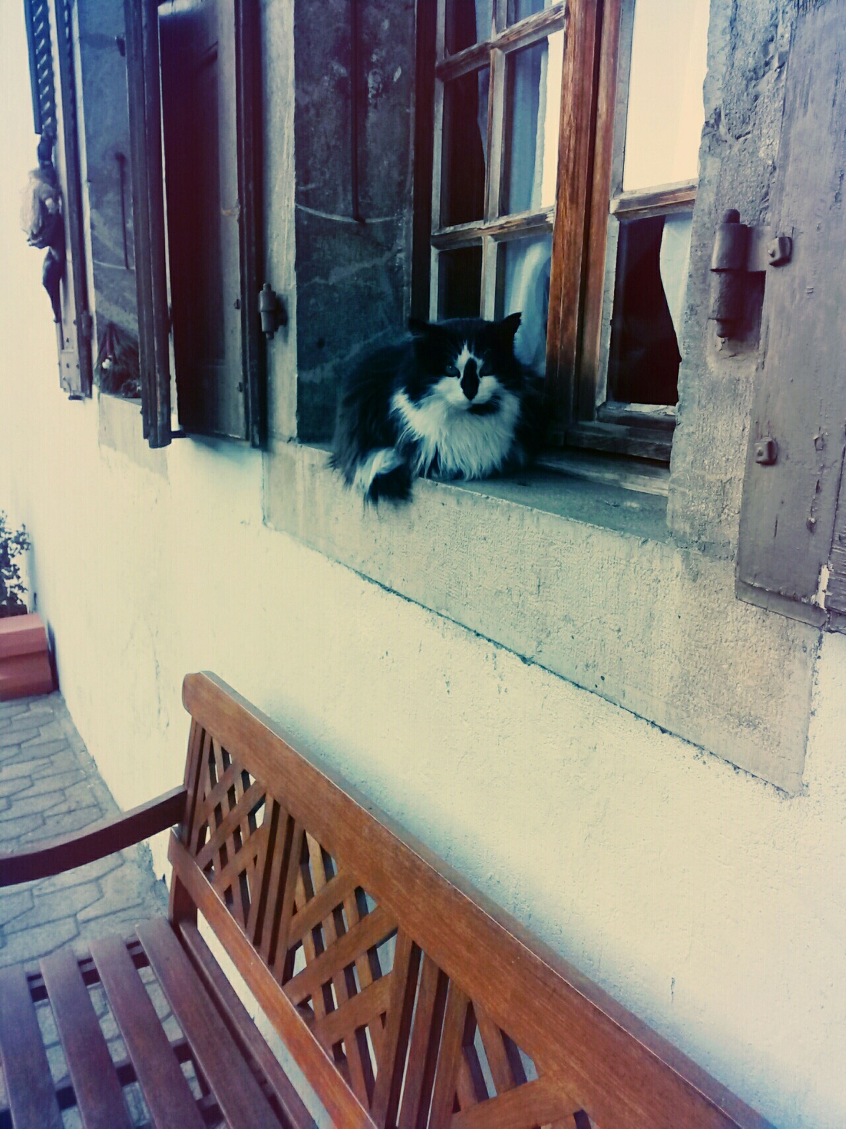 animal themes, domestic cat, one animal, domestic animals, pets, cat, mammal, feline, building exterior, built structure, architecture, house, sitting, window, steps, wall - building feature, whisker, relaxation, day, door