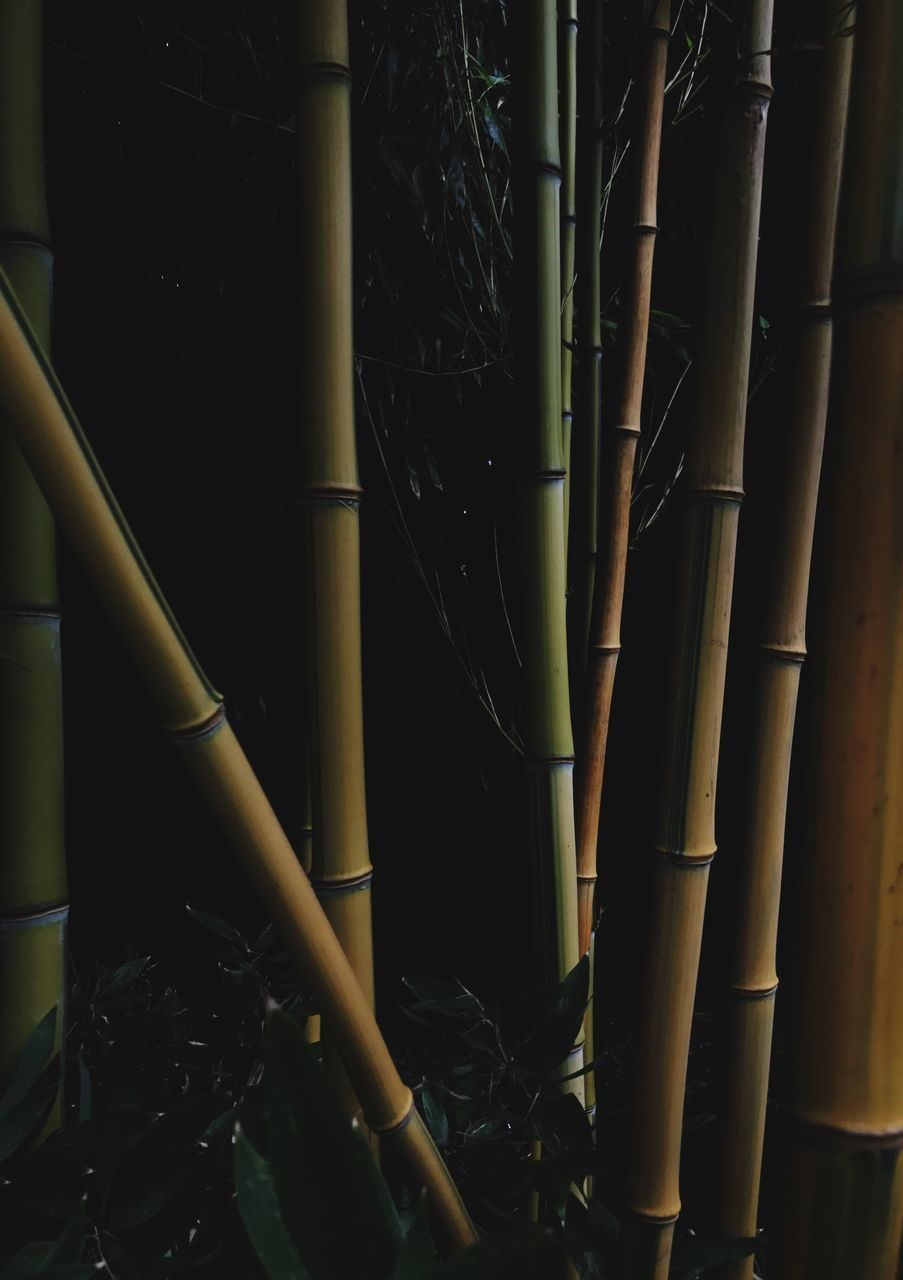 bamboo - plant, no people, bamboo grove, pipe - tube, indoors, night, close-up