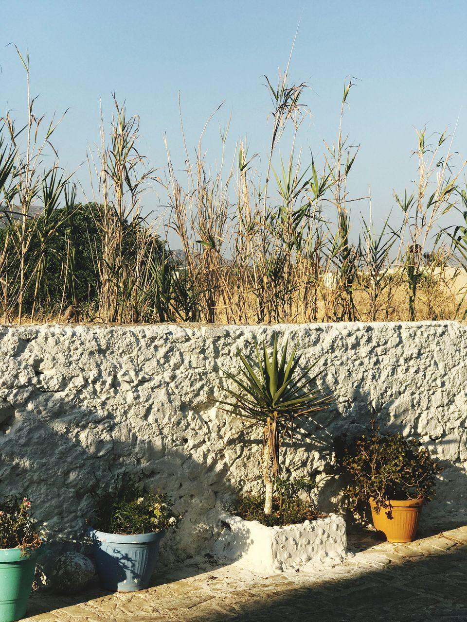 plant, growth, potted plant, nature, day, outdoors, sunlight, no people, tree, beauty in nature, shadow, sky