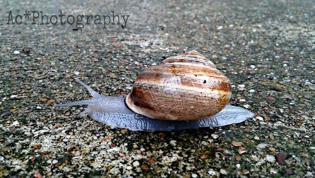 By perseverance the snail reached the ark. -Charles Spurgeon Sluggin Along... It's A Bugs Life EyeEm Nature Lover Life In A Shell Slug Bug