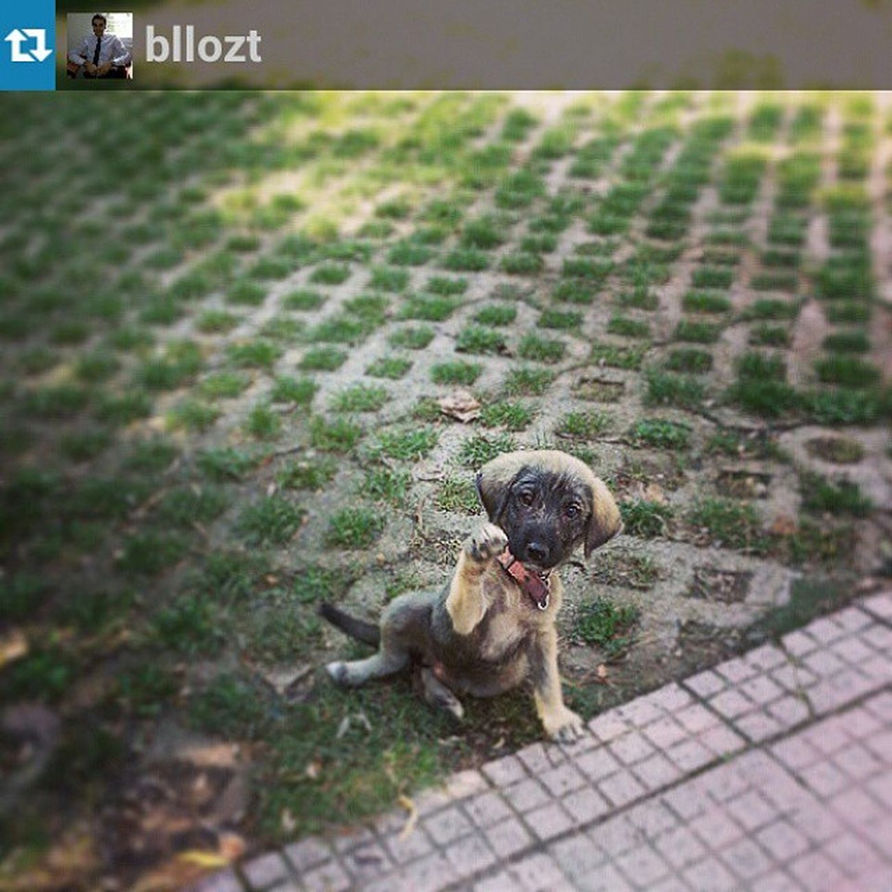 Repost from @bllozt with @repostapp — Köpekler değişse de isim hep aynı Yeni Cesur Brave dog tasma pınarca Çerkezköy