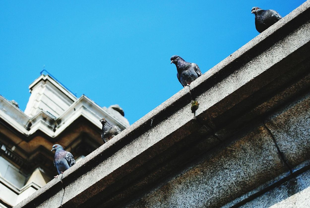 Pigeons Animals City Life London EyeEm LOST IN London Travel Destinations Architecture Low Angle View