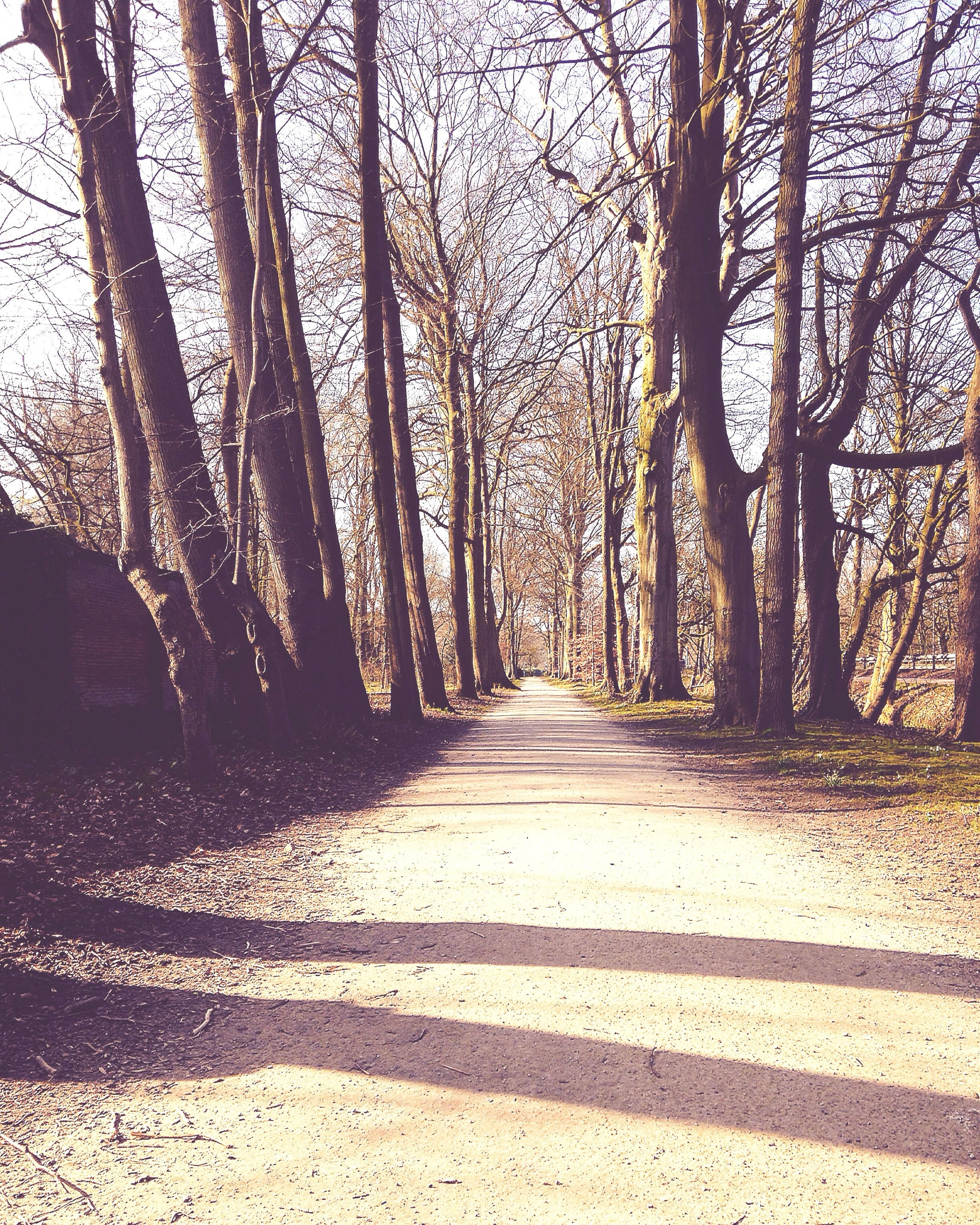 tree, the way forward, diminishing perspective, bare tree, tree trunk, vanishing point, tranquility, branch, tranquil scene, nature, treelined, shadow, sunlight, forest, road, footpath, transportation, beauty in nature, scenics, growth