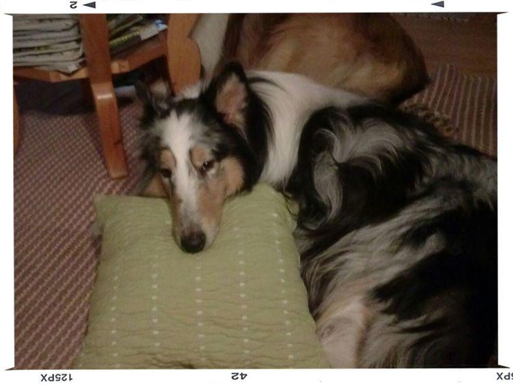my dogi<3 Enjoying Life