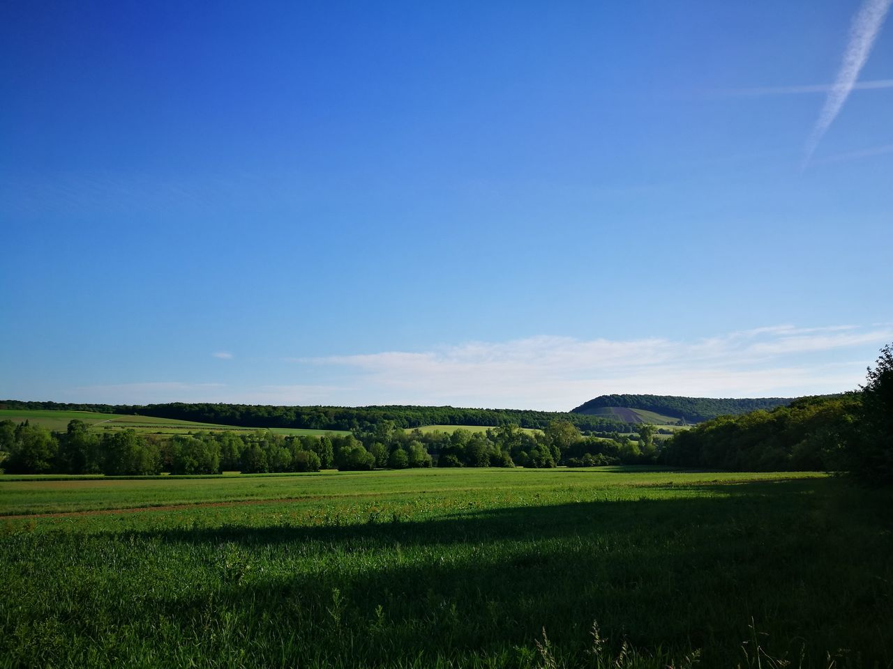 nature, tranquility, tranquil scene, beauty in nature, field, landscape, no people, scenics, day, green color, outdoors, grass, blue, tree, growth, sky, clear sky