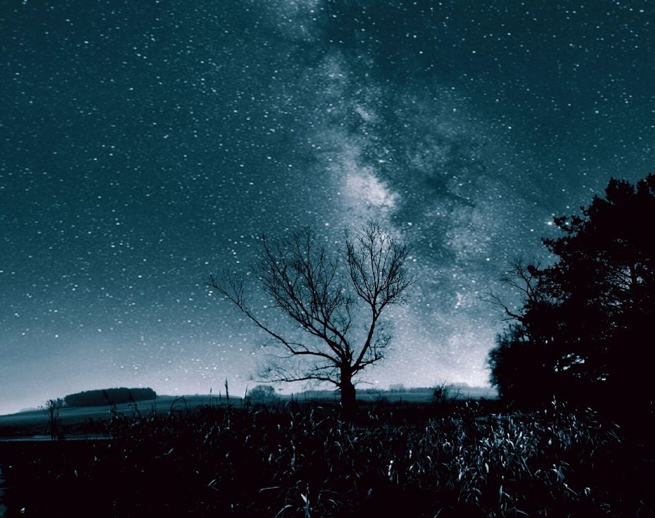 Beautiful stock photos of stars, Bare Tree, Beauty In Nature, Covered, Covering