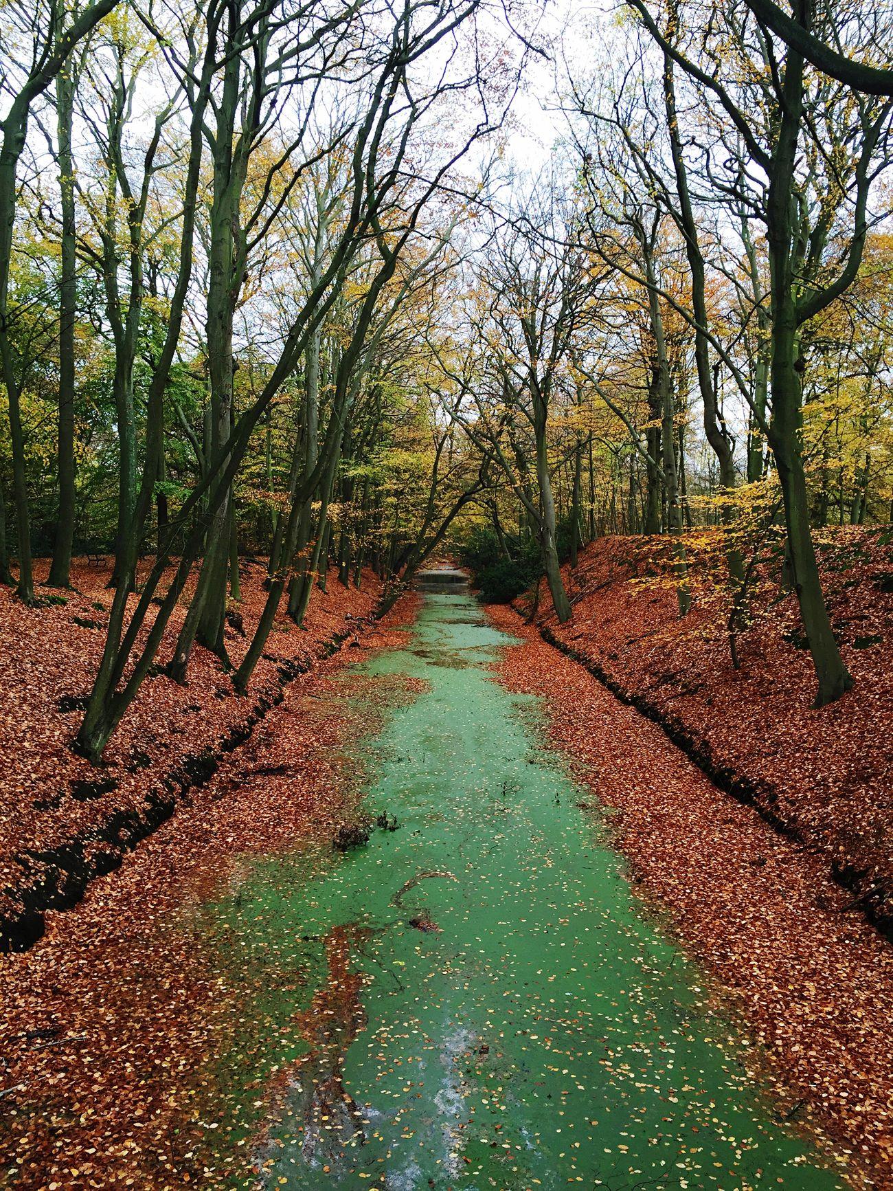 Herfst in November op Landgoed Clingendael