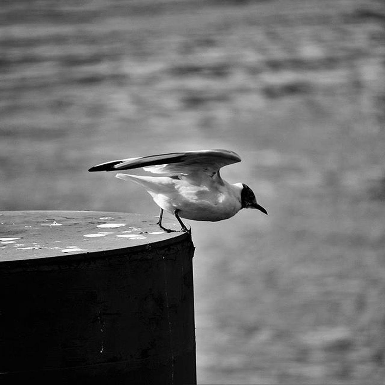L'envol Flyingbird Blackandwhite Nantesbw Igersnantes