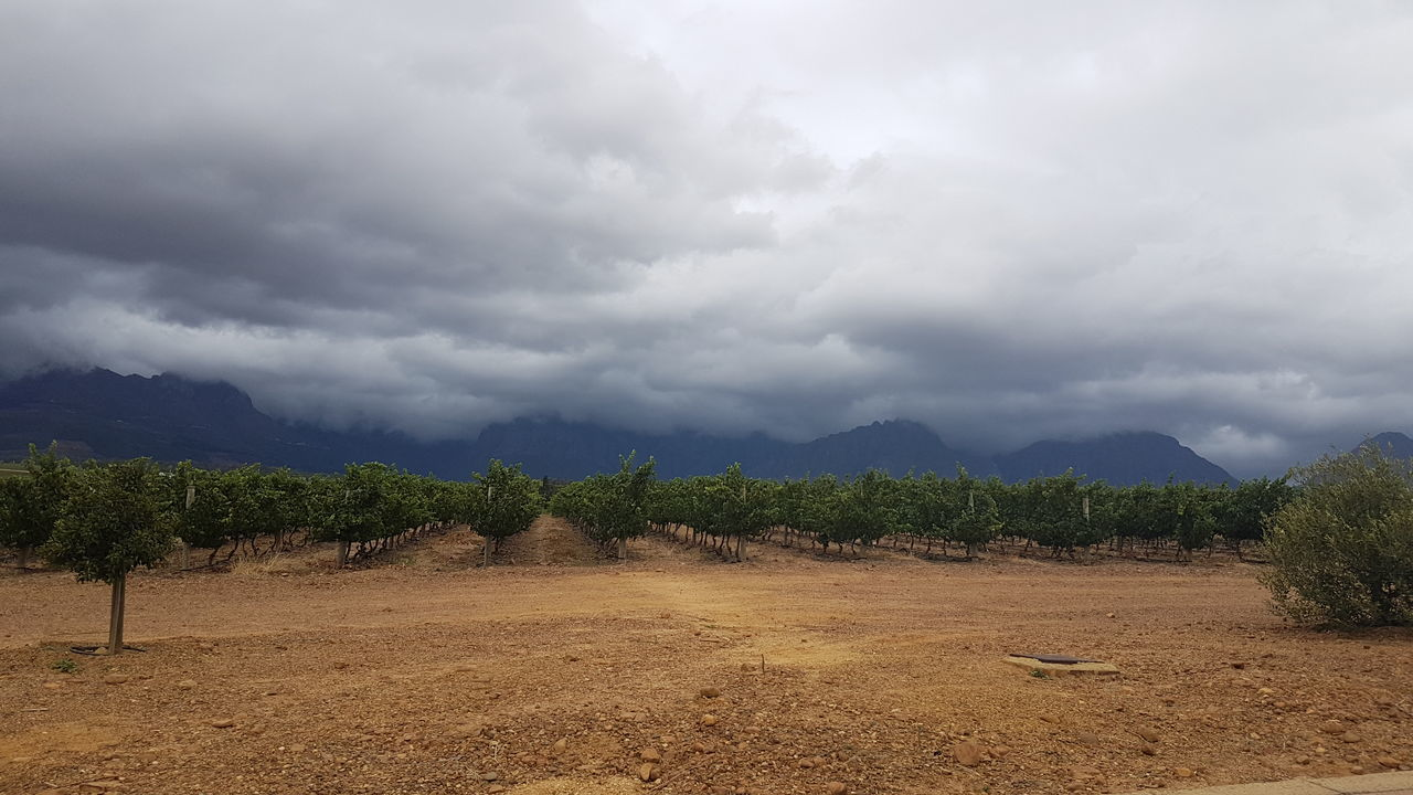 Agriculture Beauty In Nature Cloud - Sky Day Field Landscape Mountain Nature No People Outdoors Plowed Field Scenics Sky Storm Cloud Tree Vineyard