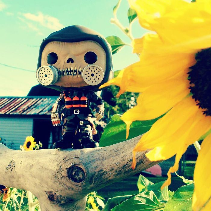 Travel Destinations Outdoors Sky Famous Place Vibrant Color Tourism Freshness Close Up Photography Scarecrow Doinghisthing Sunflower Sunflowers🌻 Still Life Eyem Best Shots Funkofunatic Funkopopvinyl Funko Day Light High Angle View Watchingout Toy Amazing Imagination Full Frame