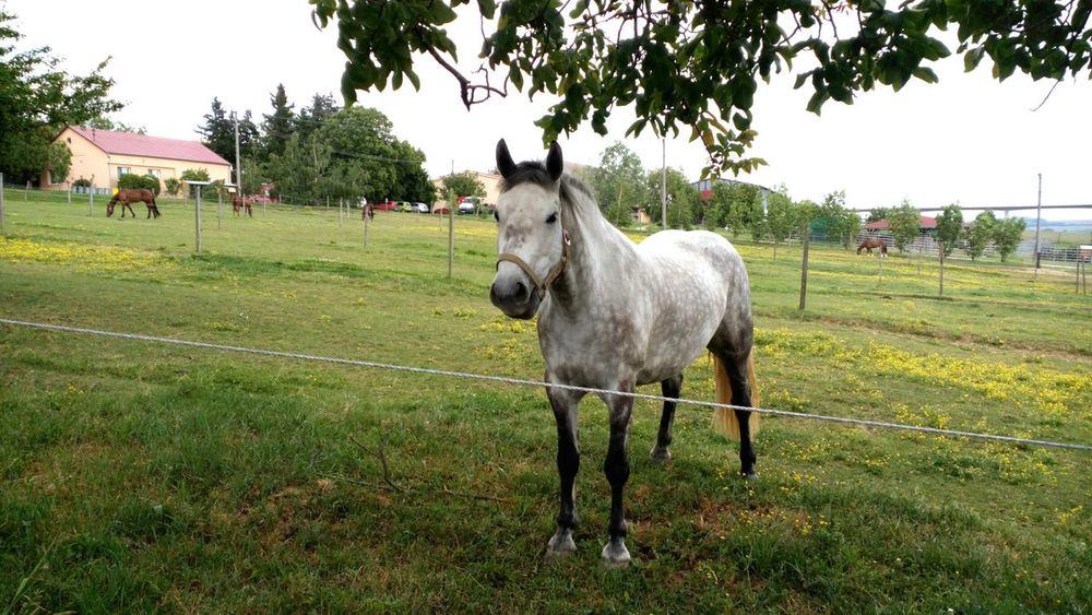 Horse Domestic Animals Mammal Animal Themes Day Tree Outdoors Village Sunday Beautiful Creature