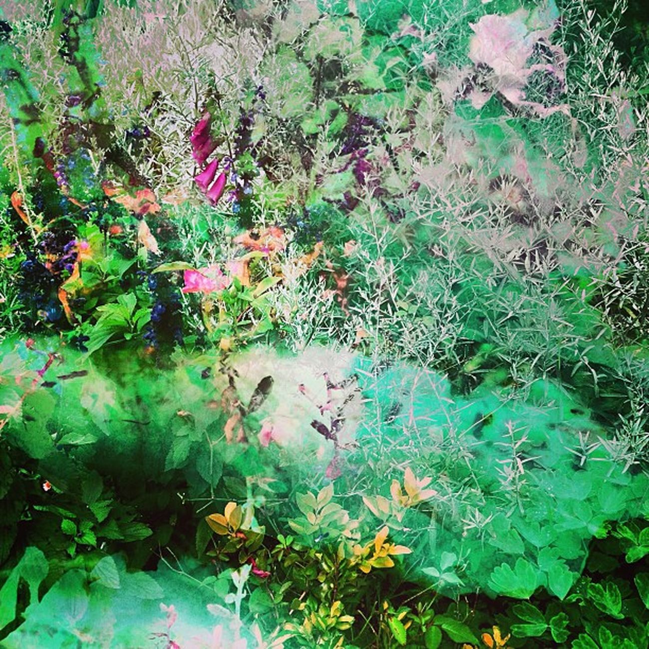 Vaguely Garden Side Deadlydivas_edits Ig_outkast Gang_family Ig_one Greenfriday Edit2gether Unitedbyedit Stunning_pics7 Mobileartistry Icatching Instauno Femme_elite Igsg Onlythe_femme Bd Hdr_femme Master_pics Weareinheaven Ig_captures Ig_artgallery Editsrus Bestinstagramart Instamasters Deadlydivas