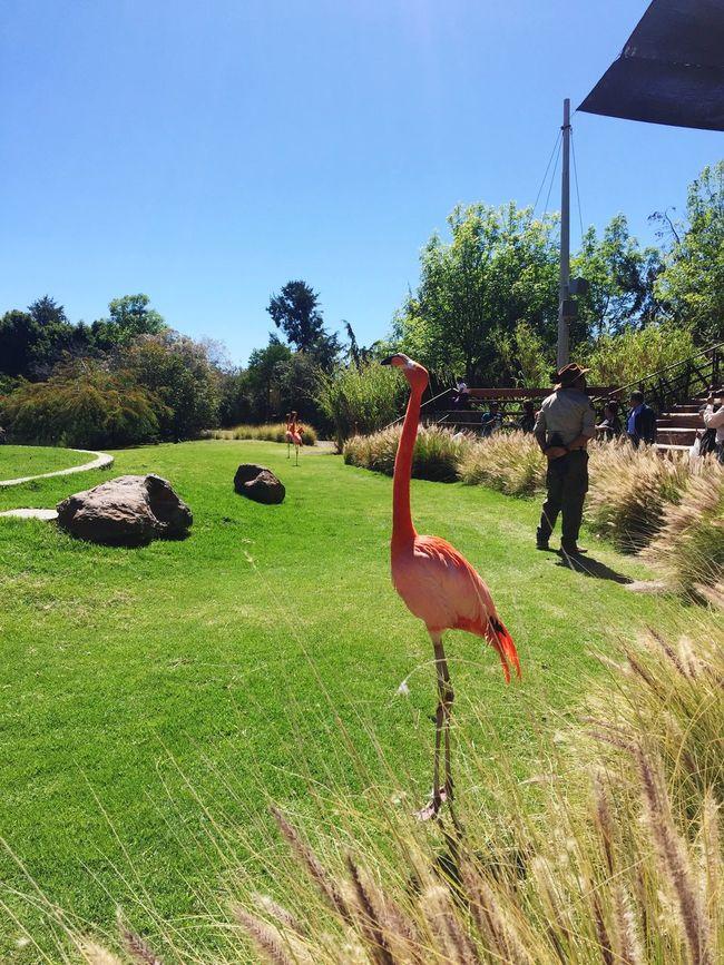 Cute♡ Flamingo Pink Africam Safari