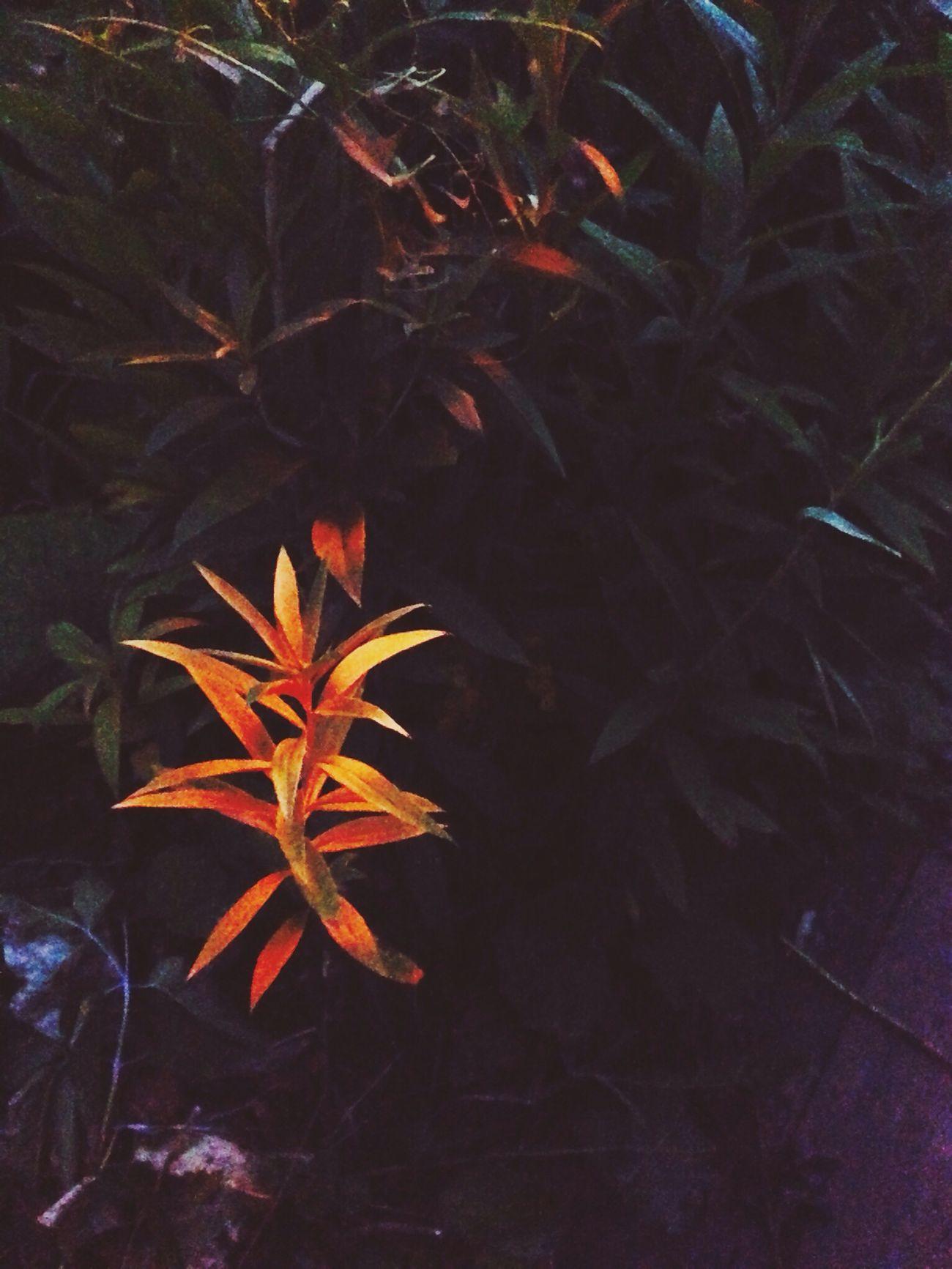 Волшебный цветок:)