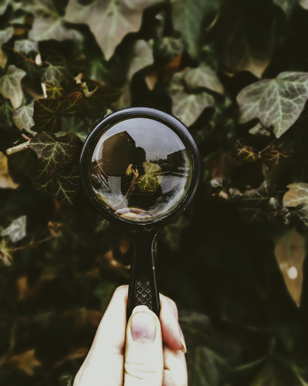 Lieblingsteil garden Creatively Perspective magnifier Nature mobile photography Reflection ivy hand