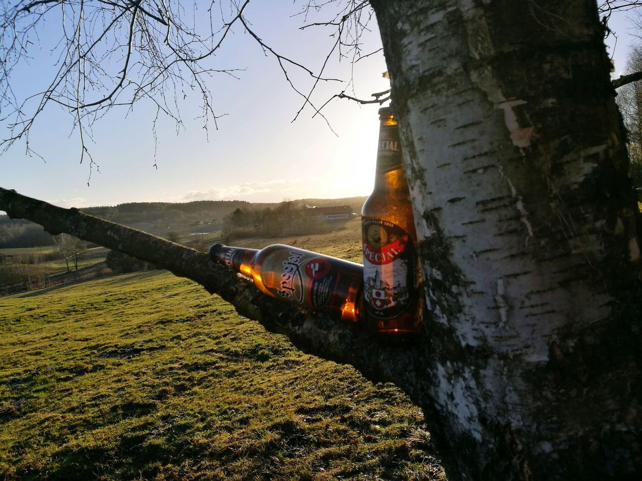 Tree Nature No People Beer Giławy Specjal Sunny Warmia, Kochamy.warmie, Warmia_fotograficznie, Warminsko-mazurskie, Mazury, Poland Warmia