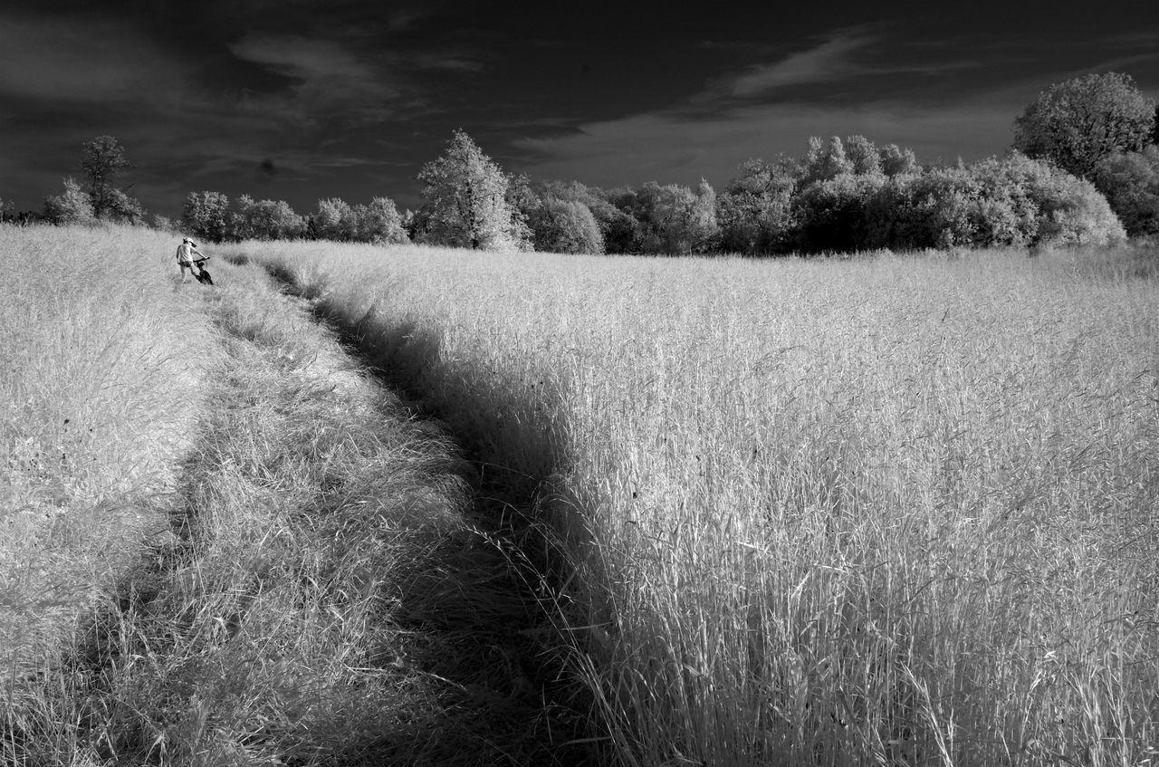 Narrow Tracks On Countryside Landscape