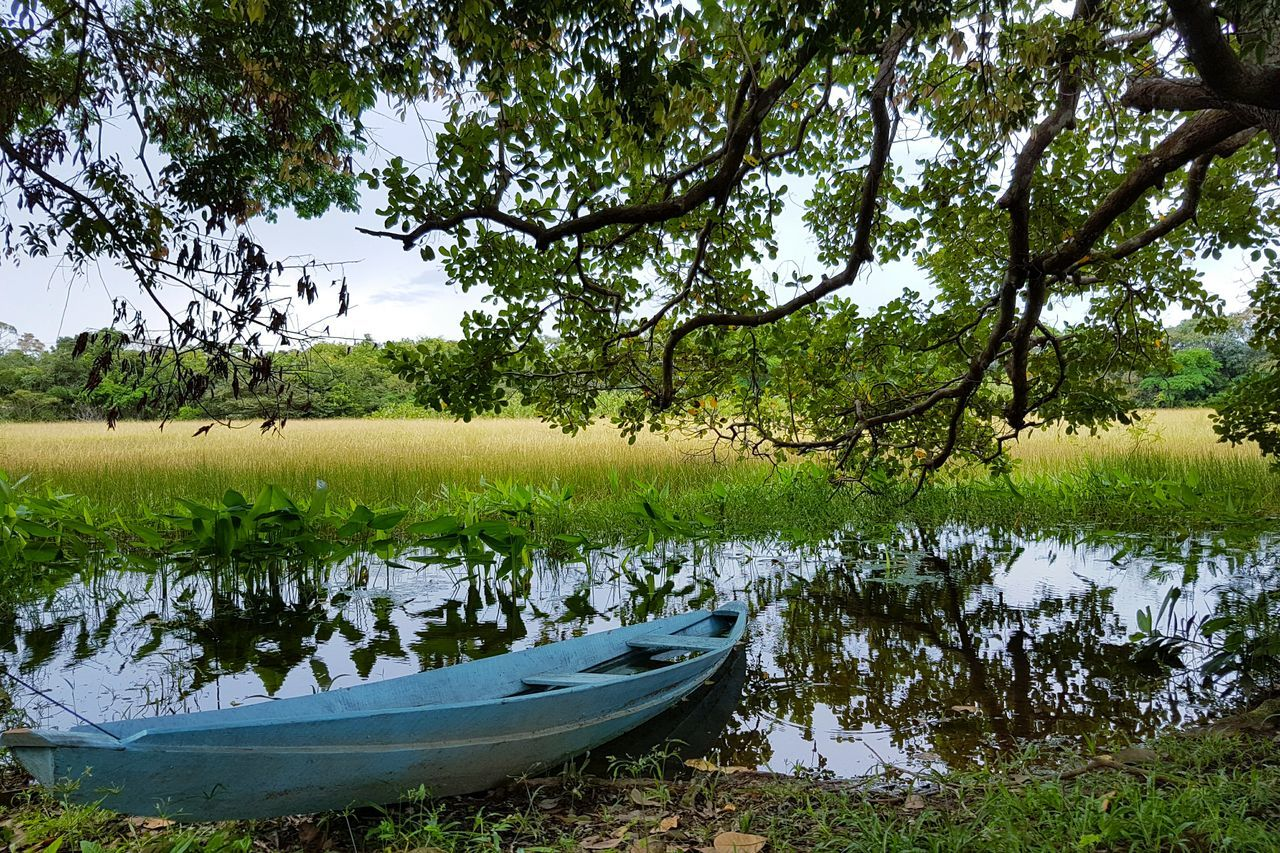 Amazonia Brazil Tree Reflection Water Nature Lake Outdoors Day Growth Nautical Vessel No People Beauty In Nature Grass Sky EyeEmNewHere The Great Outdoors - 2017 EyeEm Awards Premium Collection Getty Images Bestsellers Amazonia Area Forest Little Boat Tranquility Relaxation BYOPaper! Live For The Story