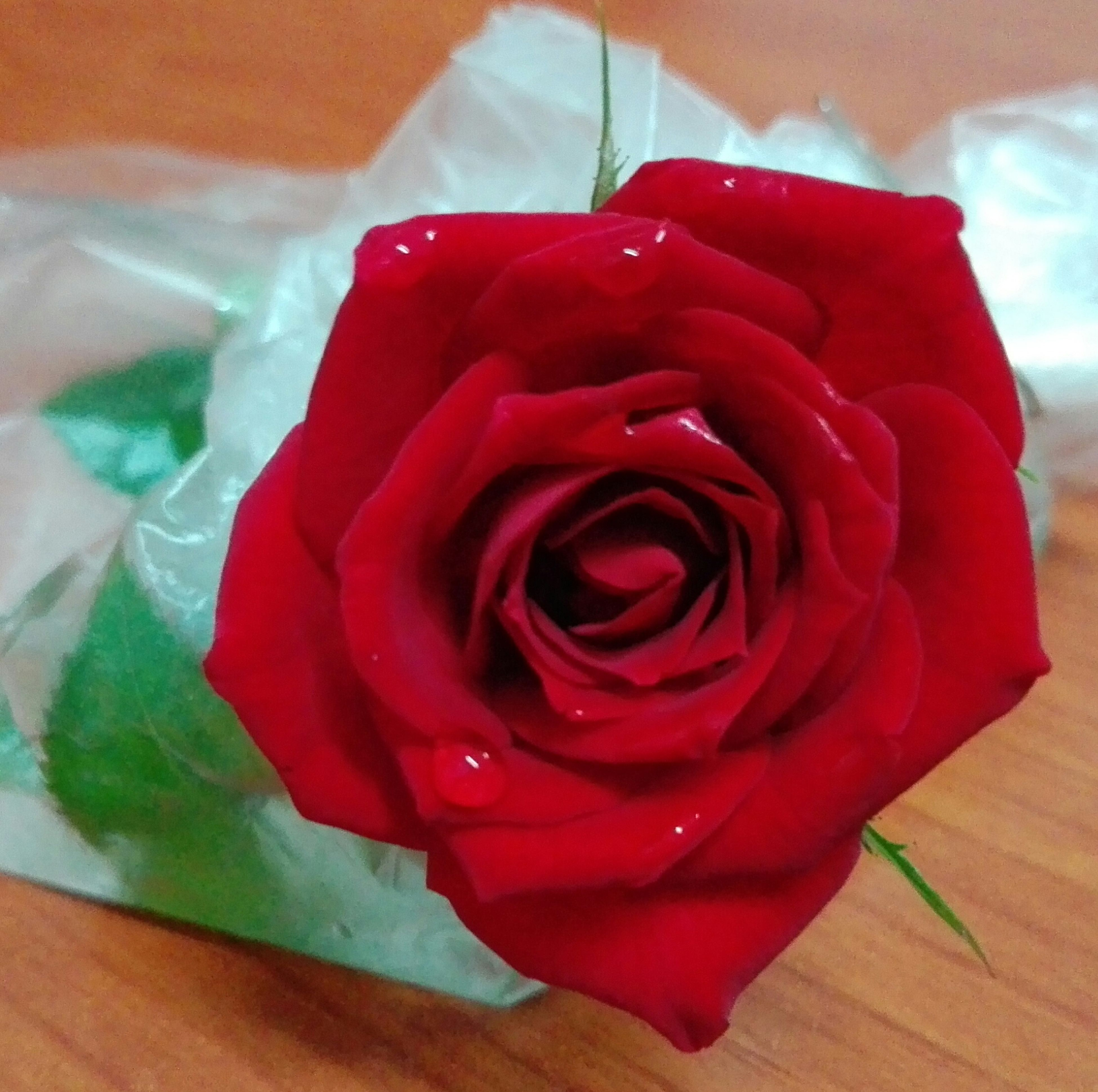 flower, rose - flower, petal, nature, beauty in nature, fragility, flower head, freshness, red, close-up, love, rose petals, no people, growth, plant, indoors, day