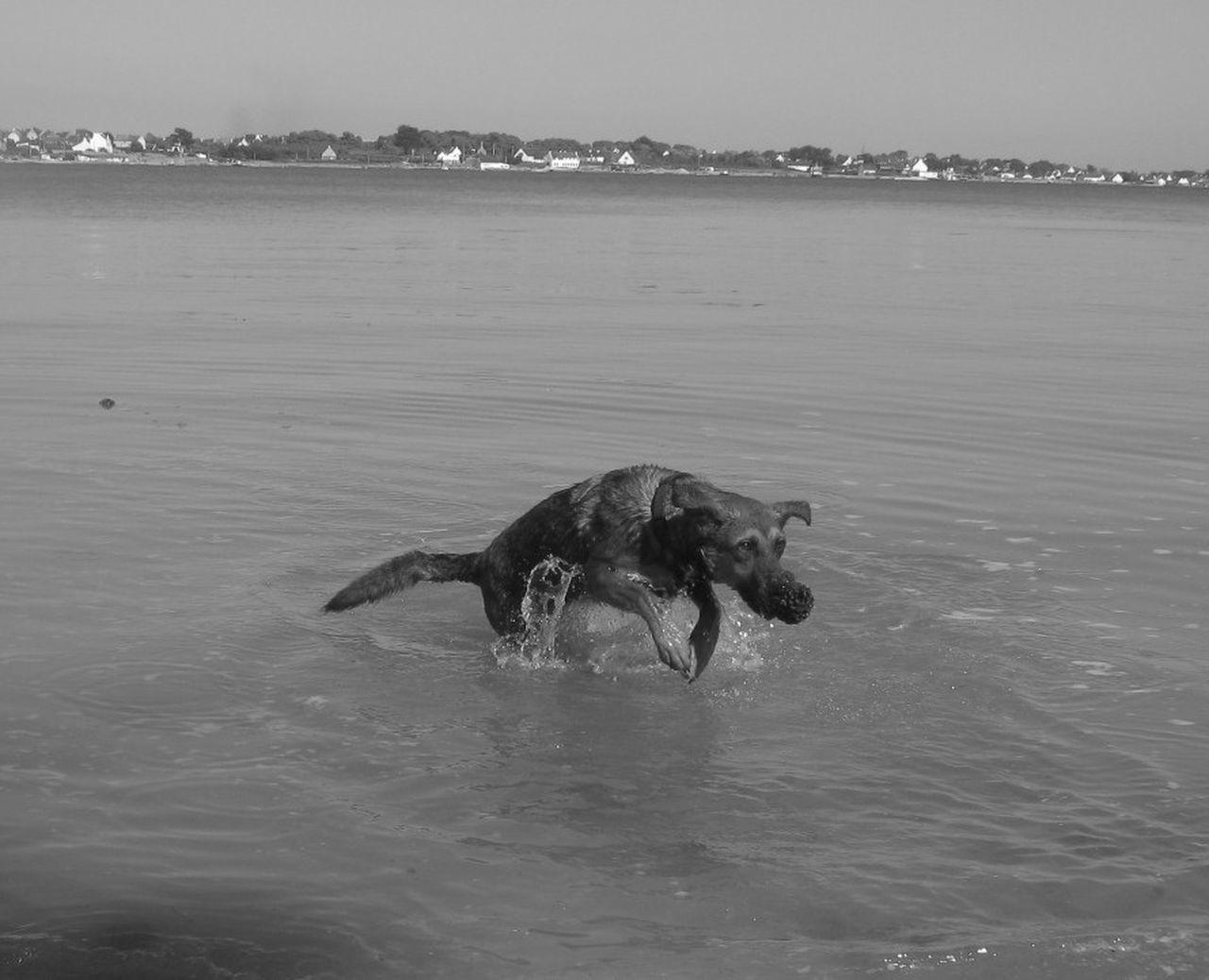 Pet Portraits Water Animal Themes Swimming Souvenir