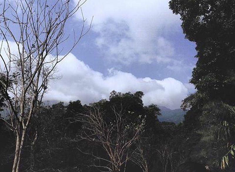 Tree Sky Clouds Bavi Vietnam Tired Withfriends