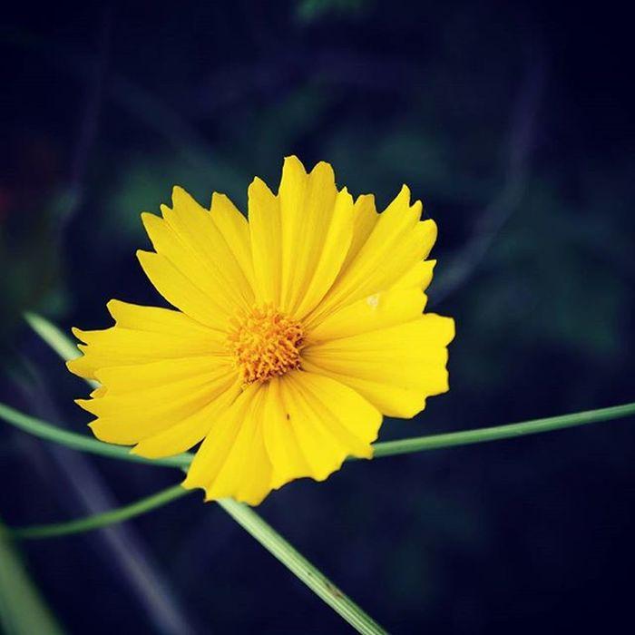 풍경 사진 취미 일상 데일리 Daily Dailyphoto Photo Korean 꽃 Flower 여름 내생각 글 글스타그램 선팔 맞팔 소통 글스타그램 좋은문구 감성스타그램 글귀 글 올림푸스 Olympusomd 사진그램 . . . . 내 맘속에 항상 지지않는 꽃으로 남아주세요. 어여쁜 모습만 기억 할수있게 .민철 . . . . 요즘 갑자기 너무바뻐졌네요.. 댓글은 마무리되면 답변할게요. 날씨가 엄청 더워졌어요 항상 더위조심하시고 휴가 잘들 다녀오세요🙏