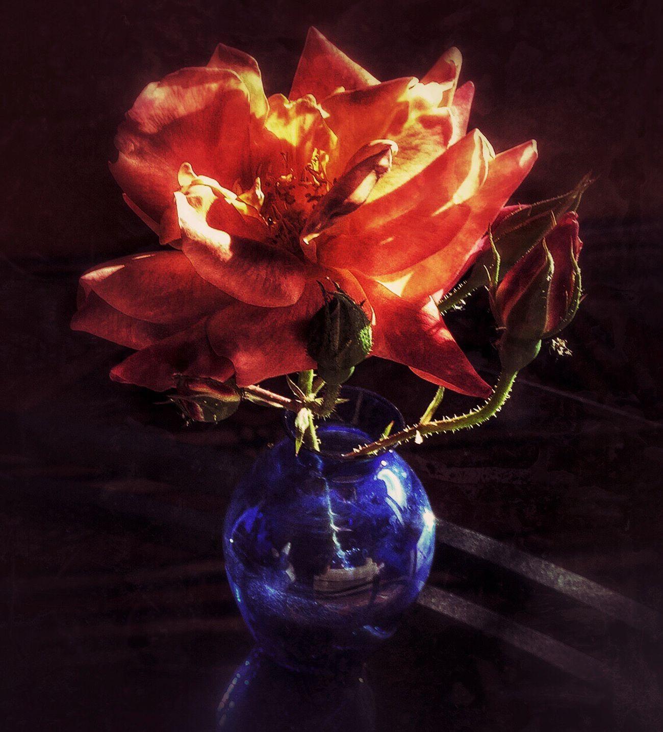 Flower Power 365.2015 Ifollowedtheyellowbrickroadtoday Shadows & Lights