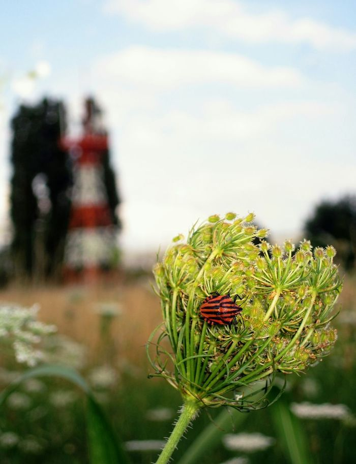 Maximum Closeness Insect Nature Sky Close-up Outdoors Plant Flower Grass No People Airport Macro Macro Photography Red And Black Milan The Photojournalist - 2017 EyeEm Awards Perspectives On Nature Be. Ready. Rethink Things