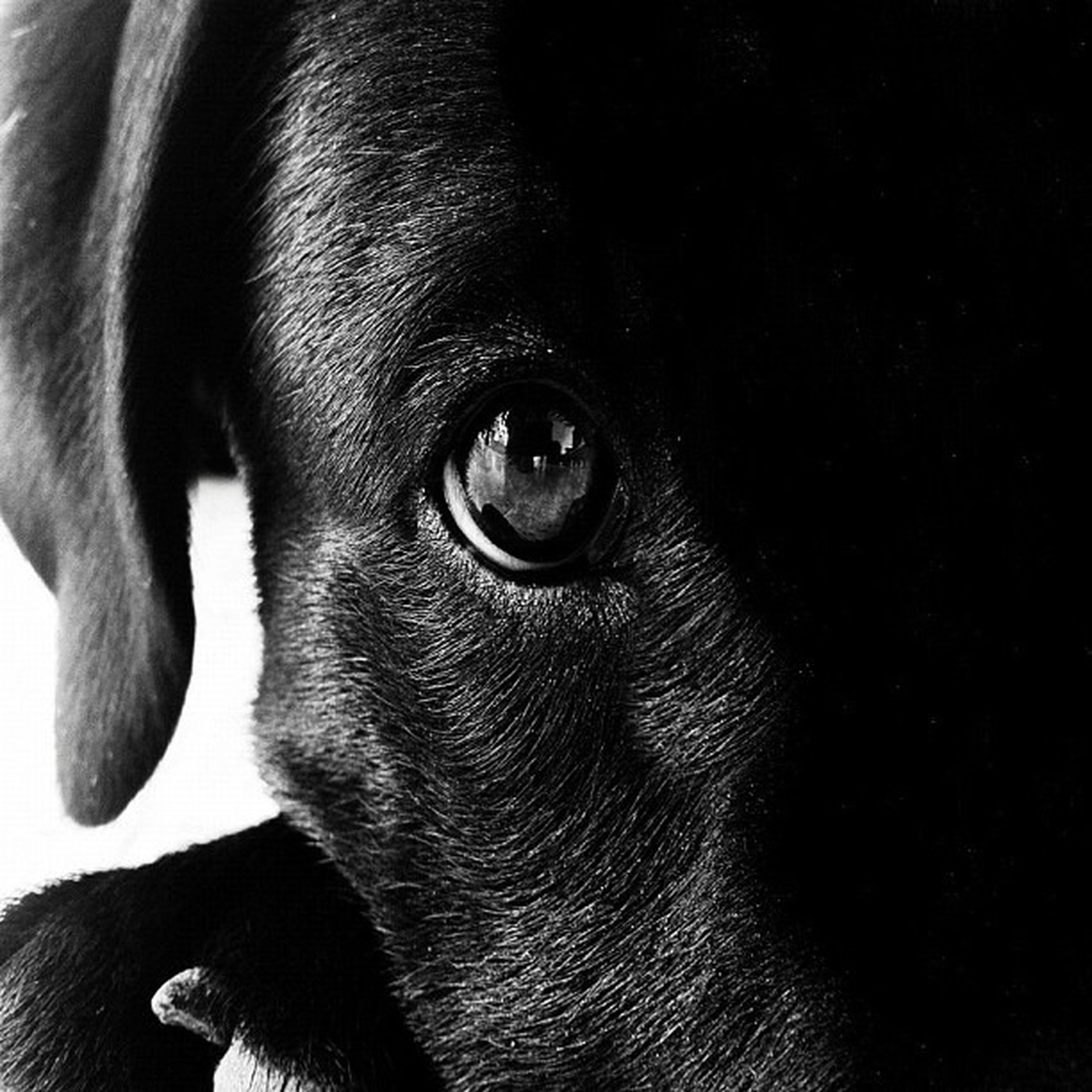 one animal, animal themes, animal head, close-up, animal body part, dog, mammal, animal eye, pets, domestic animals, part of, focus on foreground, no people, indoors, zoology, looking away, portrait, black color, extreme close up, detail