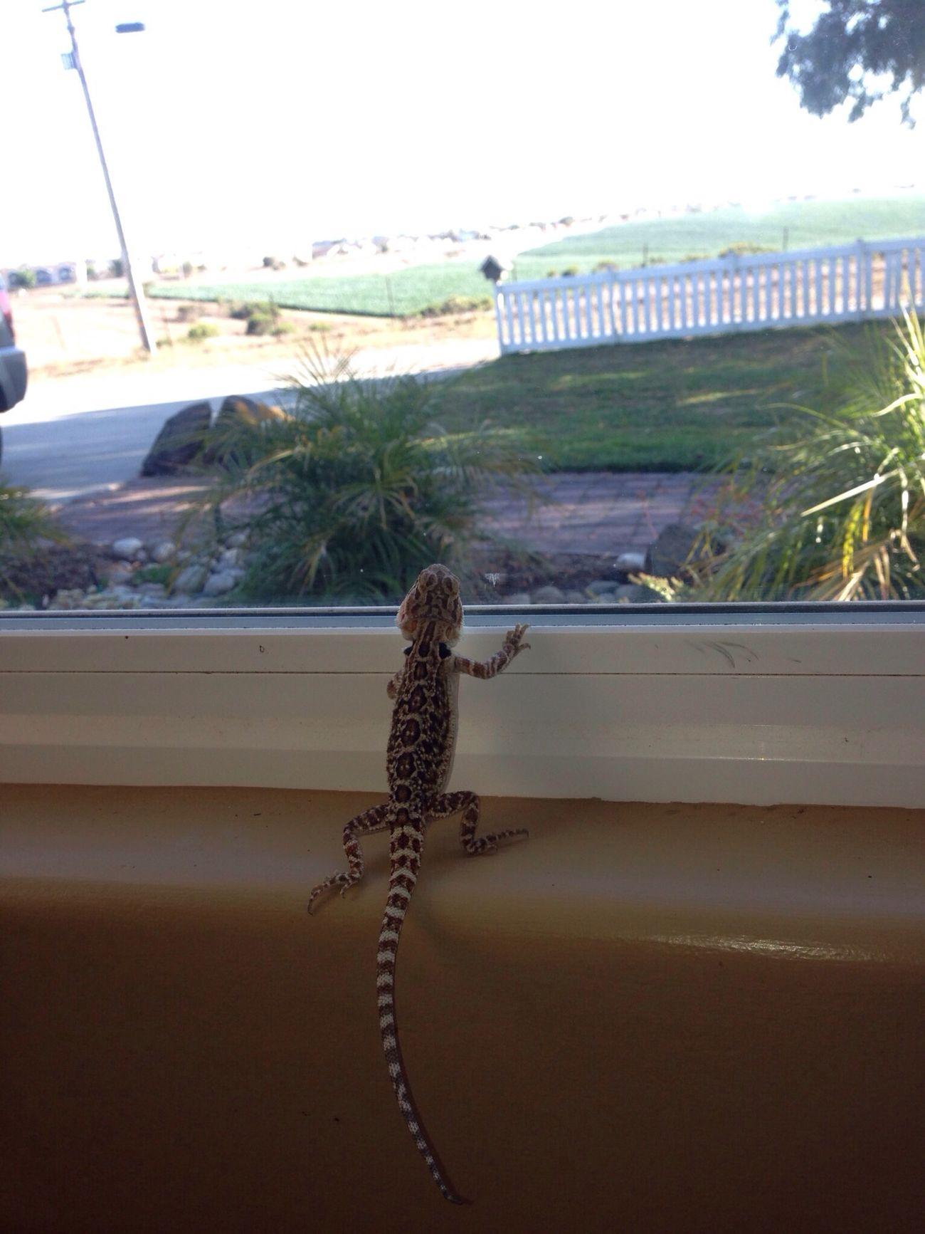 little dude looking outside