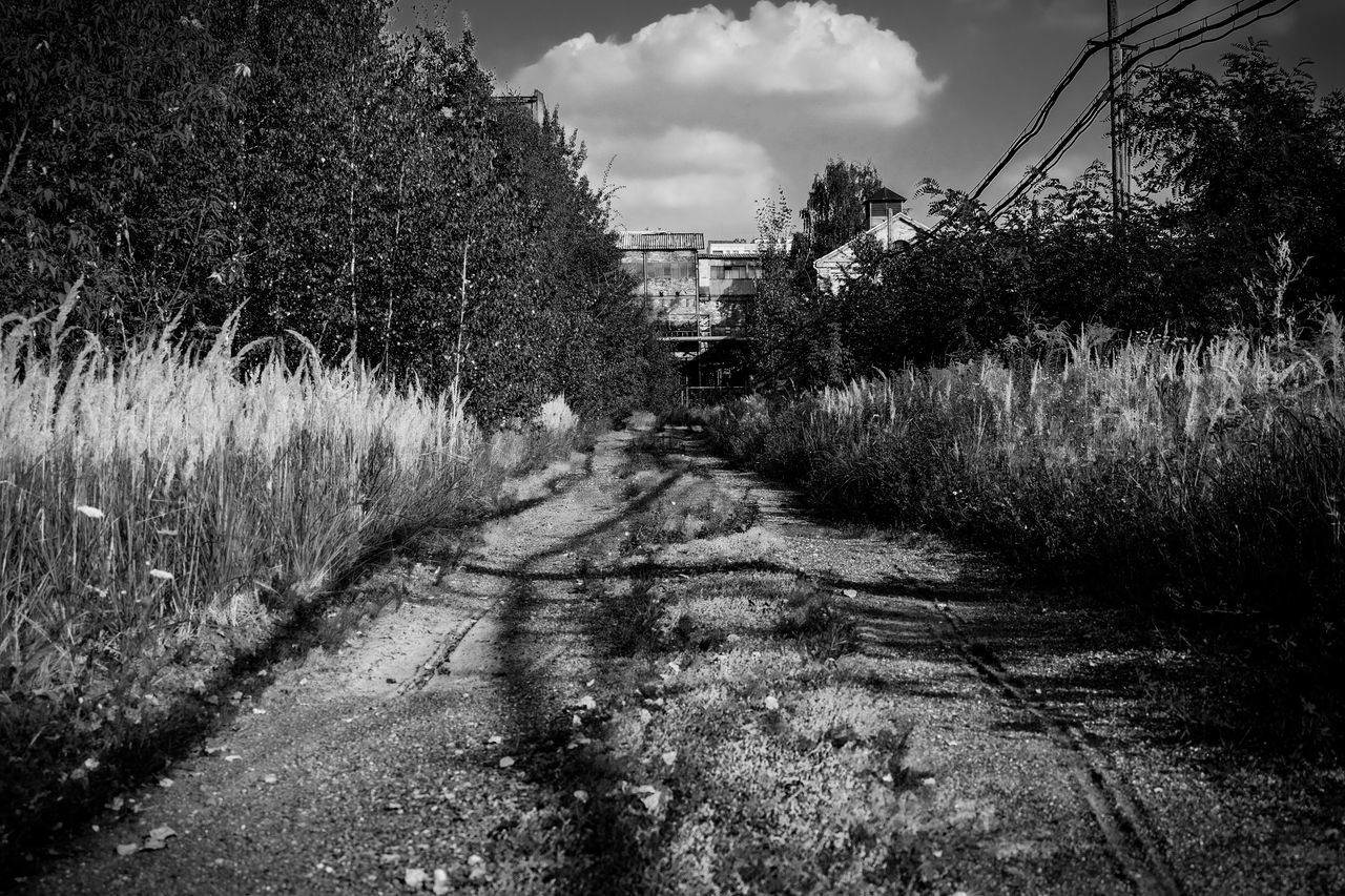 The area of the old coal mine Abandon_seekers Abandoned Abandoned Places Black & White Black And White Cloud Day Diminishing Perspective Dirty Empty Road From My Point Of View FUJIFILM X-T10 High Contrast Narrow Nature No People Sky Straight Taking Photos The Way Forward Tranquil Scene Tree Vanishing Point Wasiak Monochrome Photography