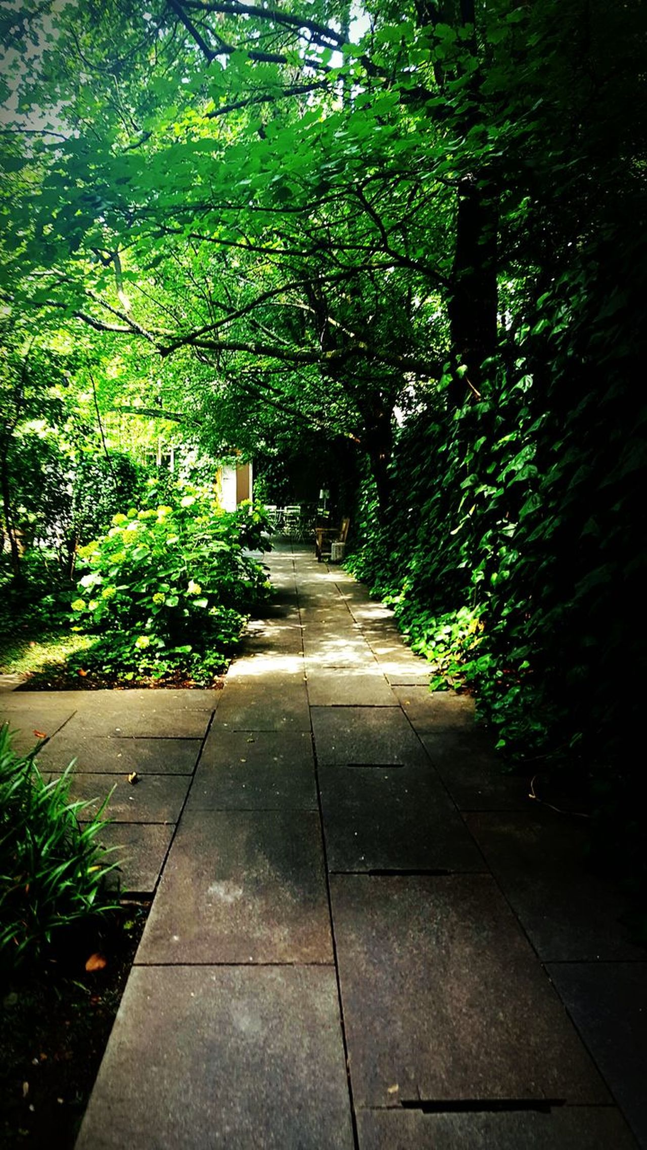 Plants Walk In The Forest Green Beautiful Atmospheric Mood Atmosphere Nature Beauty In Nature Outdoors Leaf Growth Dreamer's Vision Adapted To The City