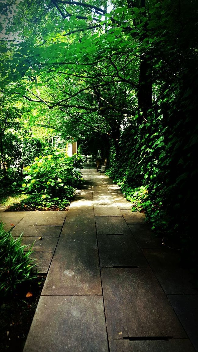 Plants Walk In The Forest Green Beautiful Atmospheric Mood Atmosphere Nature Beauty In Nature Outdoors Leaf Growth Dreamer's Vision