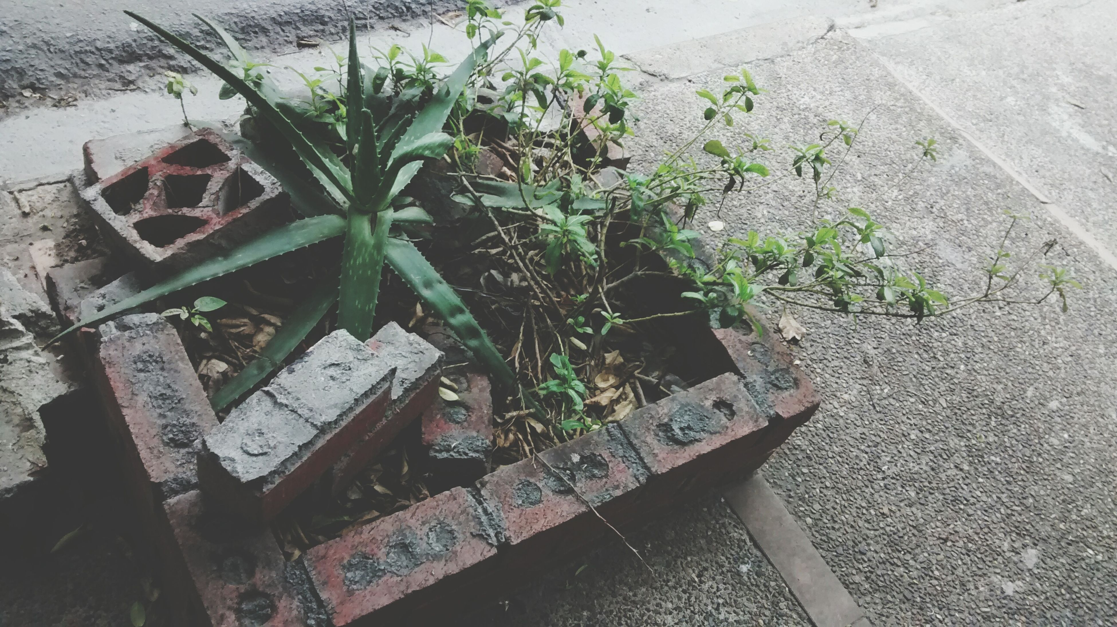 growth, plant, high angle view, leaf, outdoors, potted plant, no people, day, nature, gutter, close-up